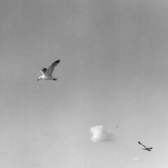 Two Seagulls and a Cloud (Laura Dunn-Mark) Tags: 2003 sky blackandwhite bw usa cloud birds freedom flying still open space empty seagull clear stillness lauradunnmark