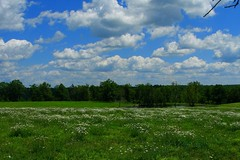 Clouds & Daisies (CountryGuys) Tags: flowers blue green field grass tag3 taggedout clouds daisies pond tag2 tag1 while