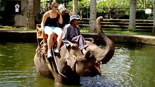Una experiencia inolvidable en el Lodge Parque Safari Elefante