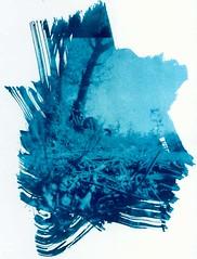 Abandoned and blue (sandge) Tags: uk longexposure blue trees england 120 6x6 overgrown landscape sussex weeds pinhole eastbourne zero2000 wheelbarrow wheelbarrows cyanotype zeroimage altprocess interestingness136 i500