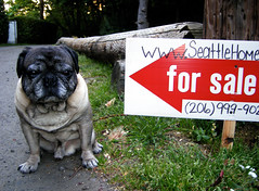 Pug With For Sale Sign