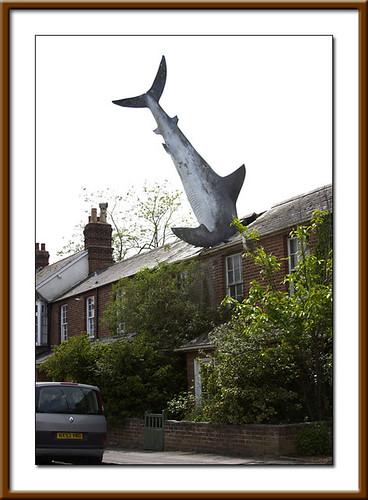 Shark attacks plane - photo#11