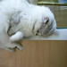 ネコ:R0012986