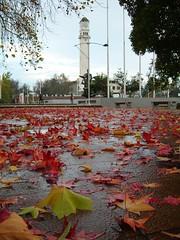 Lluvia de Otoño [Leaves