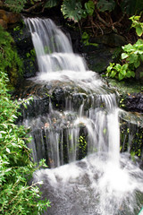 Waterfall (janinehealy) Tags: longexposure light plants plant green slr nature water leaves canon 350d rebel xt waterfall exposure waterfalls dslr janine stratford butterflyfarm janinehealy stratfordbutterfyfarm