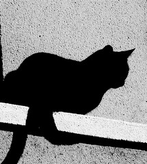 Black cat (pedrosimoes7) Tags: bw black portugal cat lisbon luna mireasrealm flickrduel 30faves30comments300views