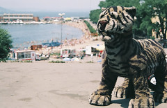Beach and a tiger