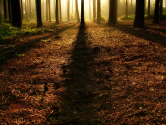 I love these woods (Kevin Day) Tags: morning light woods shadows interestingness1 slough berkshire kevday morningsun blackparkcountrypark sppccandid