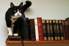 Matching the books (Dr. Hemmert) Tags: pet cats black cute animal cat kitten sweet kitty artemis toxedo blackmasked