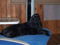 Sadie - Porch