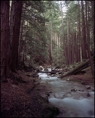 Redwoods, Lime Kiln State Park, California 2005 (artandscience) Tags: kodak redwoods 160vc largeformat crowngraphicspecial