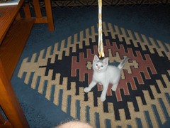 hpim0096 (joexner) Tags: june kitten edgar