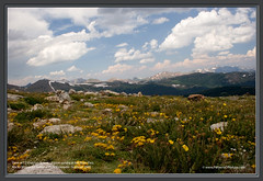 View at 12 thousands feet - Alpine tundra @ Fall River Pass