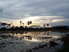 Cambodian sunset (There can be only one  Rob!) Tags: trees sunset reflection countryside cambodia khmer palm kampot deleteit saveit deleteit2 deleteit3 deleteit4 deleteit5 deleteit6 deleteit7 deleteit8 deleteit10 deleteit9