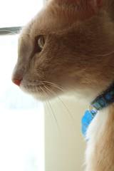 alert (strph) Tags: cat profile crookshanks 2006 catsandwindows