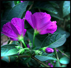 not real (edo40ode) Tags: plant flower macro green nature colors closeup photoshop effects purple details unreal