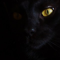 Kiko (hug0ncalves) Tags: blackcat black cat cateye cateyes photo photography inexplore explore explored animal