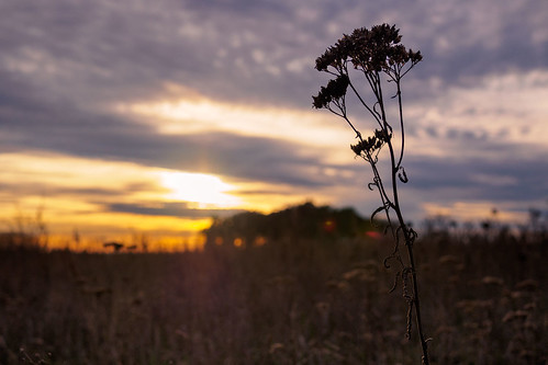Sonnenuntergang im Fläming 1