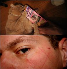 365 #62 (death and gravity) Tags: diptych catnip scratch ebi 365days
