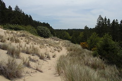Trail shot (rozoneill) Tags: beach oregon forest coast florence baker hiking dunes trail national backpacking area recreation siuslaw wsweekly140