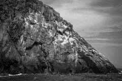 Black Head, cliff, Monhegan, Maine, Nikon D40, Sigma DC 18-50mm f-2.8,, 8.1.15 (steve aimone) Tags: ocean sea blackandwhite cliff seascape monochrome rock dc maine rocky sigma monochromatic blackhead atlanticocean f28 monhegan bluff monheganisland 1850mm nikond40
