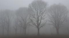 Misty (darioseventy) Tags: mist nebbia fog alberi trees city città atmosfera park parcp atmsphere