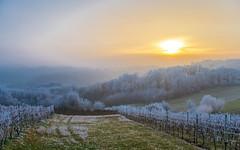 Zagorje (25) - frost (Vlado Ferenčić) Tags: zagorje hrvatskozagorje hrvatska frost veternica croatia winter nikond600 nikkor357028
