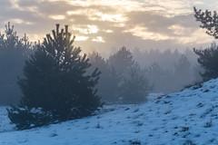 Kootwijkerzand - Veluwe (benjaminvanwaart) Tags: sneeuwsnowzandverstuiving kootwijkerzand kootwijk gelderland veluwe winter