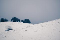 Sensualité (Colette RICHARD, auteur-photographe) Tags: france montagne mountain sensuality sensualité courbe arbre tree landscape paysage ciel chargé