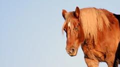 Horse (patrick_milan) Tags: landunvez plouguin ploudalmezeau portsall kersaint landeda lannilis treglonou saintpabu pabu abers finistère brittany bretagne bzh saintrenan renan lanildut aberwrach lampaul plouarzel breles cheval horse magicmomentsinyourlife cof22 cof022mvfs cof022pasc