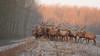 Edelherten in de winter (Alex Verweij) Tags: edelhert edelherten deer stack gewei wild natuur nature alex verweij canon 40d almere winter vorst rijp ochtend morning explore nr7
