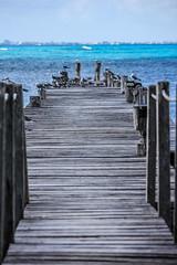 IMG_0332 (DaveGifford) Tags: mexico islamujeres birds jetty seagull casabonita quintanaroo