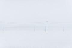 Power and Powder (lestaylorphoto) Tags: japan akita travel shinkansen bullettrain snow winter trees field snowy cold white nikon d610 leslietaylor lestaylorphoto ç§ç° éª æè¡ æ°å¹¹ç· ãã¤ã©ã¼ ã¬ã¹ãªã¼ powerlines minimalist