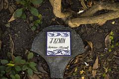Jazmin (Curro Chompis) Tags: jazmin jasmine flor flower