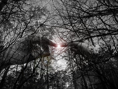 Touch... (thunder97x) Tags: nikon coolpix p530 landscape forest hands fingers light one touch closeness branches structure abstraction blackandwhite contrast photoshop my art