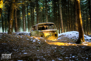 Stranded in the woods