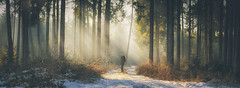 Everlasting Light (Stefan (ON/OFF)) Tags: sunbeam sunlight sunrise sunset raysoflight raysofgod godrays forest forestscape woods timberland timber woodland winter snow light color trees tree silhouette viewpoint pointofview a7m2 sonya7ii sonya7m2 samyang1352 samyang2135 samyang 135mm pano panorama person people photographer love