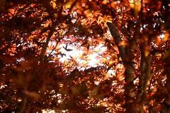 (atacamaki) Tags: life red plants nature blood  fujifilm  18135 xt1  jpeg