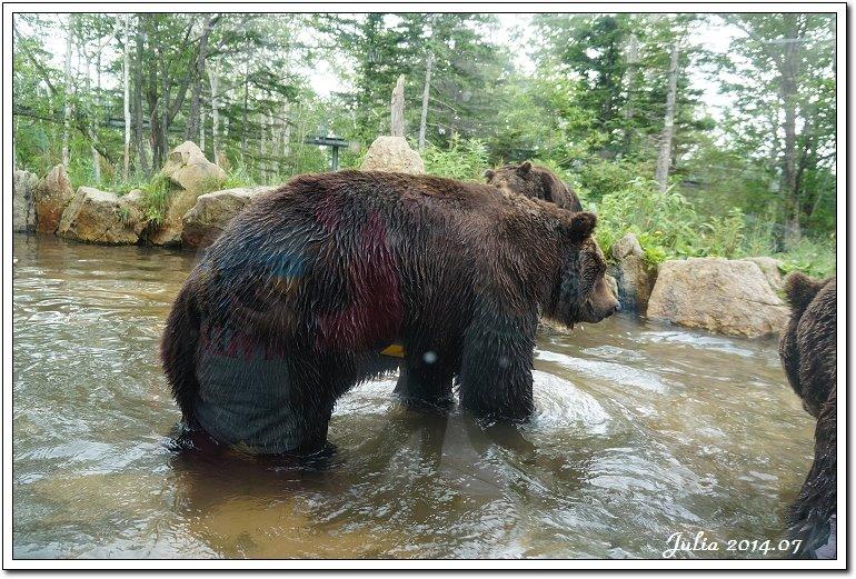 熊牧場 (29)