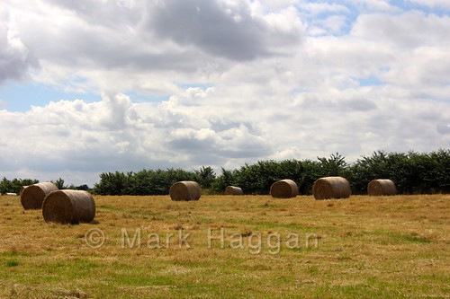Hay in the village of Heather