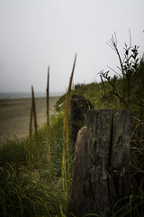 PACIFIC NORTHWEST 31 (Detective Steve) Tags: plants beach nature grass solitude pacificnorthwest oceanshores natureycrap