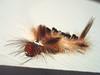Tina Turner (cris.isaia) Tags: caterpillar oruga tinaturner bichocabeludo