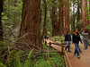 Ancient Forest stroll (Nailand) Tags: ancientforest stroll bokeh usa forest nature california