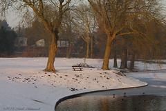 Winter (Natali Antonovich) Tags: winter tervuren snow frost christmasholidays christmas nature belgium belgique belgie landscape water park tree birds