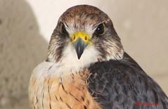 (58) Liberty's Owl Raptor & Reptile Centre
