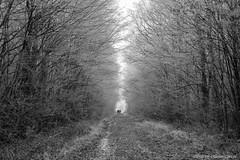 36Givrés (Pierrokaphoto) Tags: froid glacé givré chemin fuite couple végétation arbres