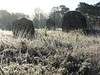 petit matin givré dans les menhirs de Carnac (camaroem56) Tags: france bretagne morbihan armor argoat terre menhirs froid givre alignements