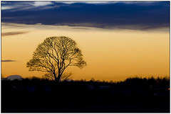 Tree (theimagebusiness) Tags: theimagebusiness theimagebusinesscouk scotland winter tree silhouette shadow light location westlothian art beauty nature environment landscape landmark momentintime outdoors outside open photographersinwestlothian pretty rural sky uk visitscotland weather rx100 glorious sunset sundown wintersun settingsun twilight cloud creative cloudjunkie glow branches trunk noleaf cold freezing colour