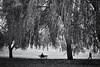 Hampstead Autumn (Fuji and I) Tags: london hampsteadheath parks autumn seasons willow trees alexarnaoudov fujix