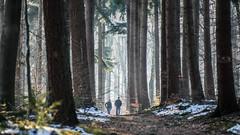 DSC05216-22 januari 2017-22 januari 2017 (mauriceweststrate) Tags: 135mm 28 meyeroptik rozendaal sonya77 winter bos bossen cold forest forests mauriceweststrate meyeroptikgorlitz135mmf28 rays sunrays tree trees